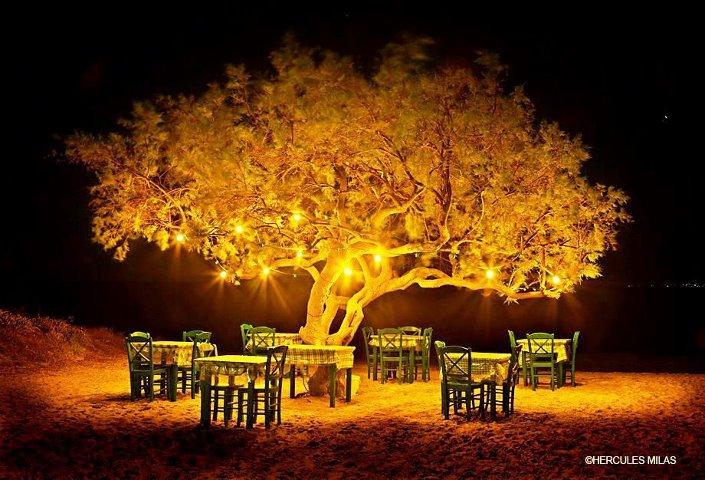 Naxos Taverna ''Under the Tree''at Maragas beach Greece